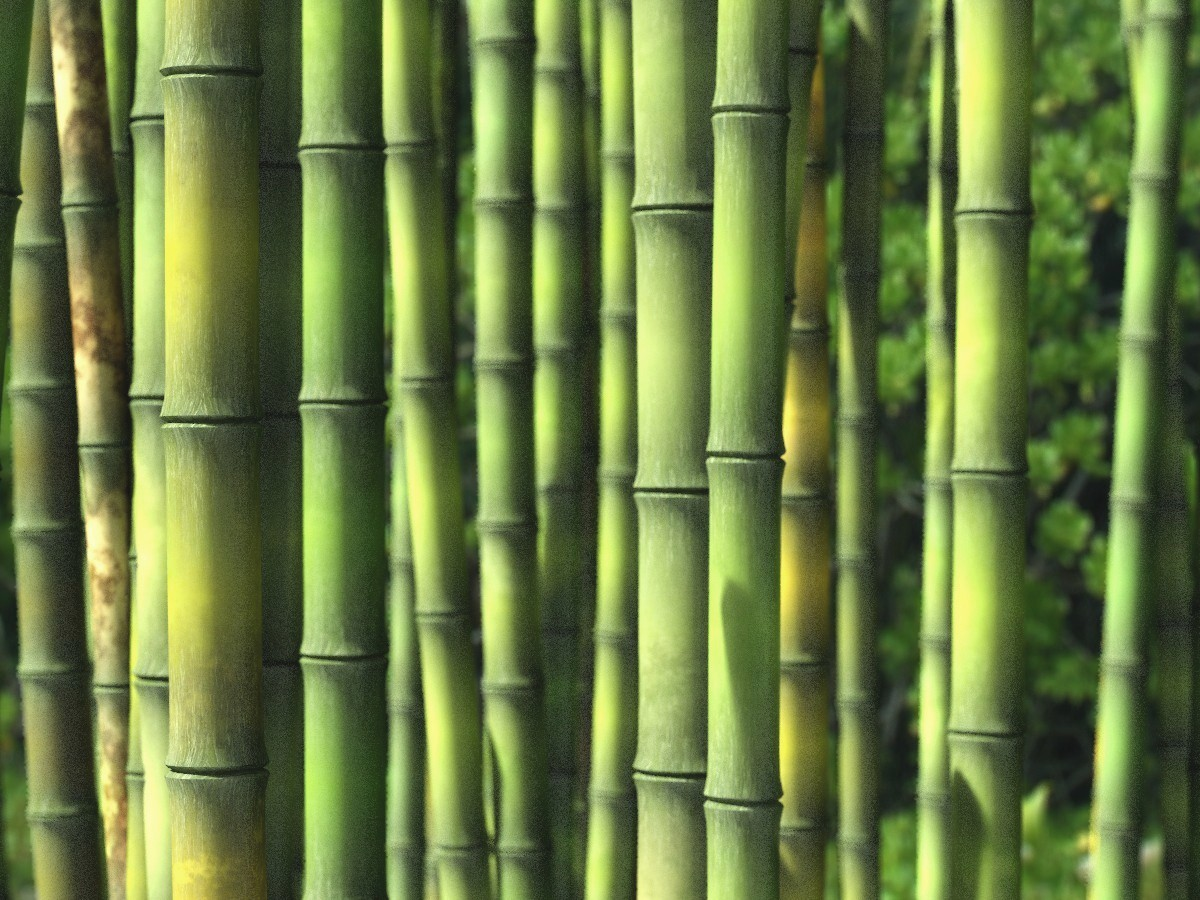 Bamboo dating site